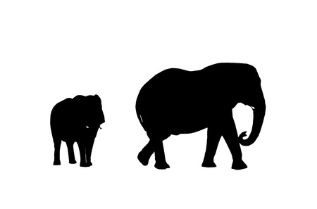 Silhouette elephant cow with baby elephant on white background   photo