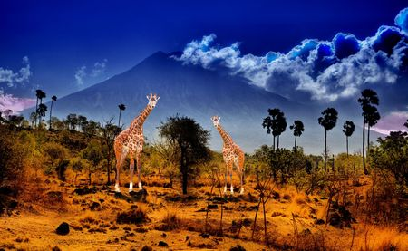 Two giraffe in savannah on background of mountains photo