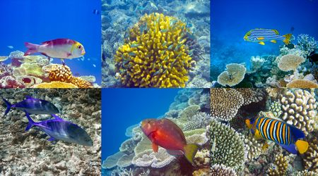 Indian ocean. Fishes in corals photo