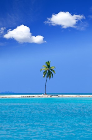 Lonely palm tree in the middle of ocean on background of sky, Maldives