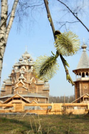 Kind through willow on Wooden orthodox church Russia (Pokrovskaya church) (palm sunday) photo
