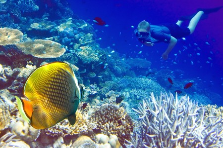 Maldives. The diver at ocean and tropical fishes in corals.