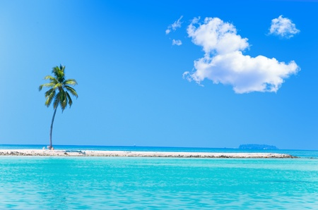 sea resort: Palm tree on tropical island at ocean. Maldives. Stock Photo