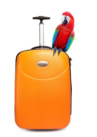 The colourful parrot sits on a suitcase for travel