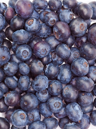 bilberry: Berries of a bilberry  Stock Photo