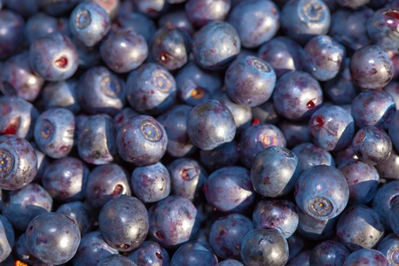 bilberry: berries of bilberry