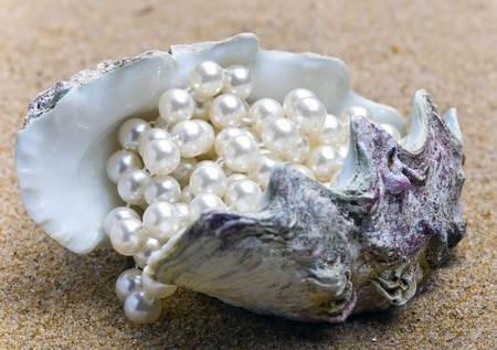 Pearl and shell Stock Photo - 10233330