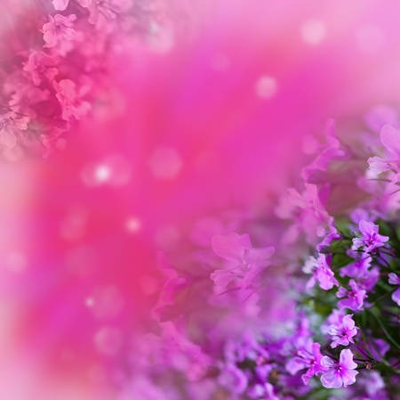 Flowers on  abstract background photo