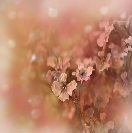 pastel colors: Pastel floral border Stock Photo
