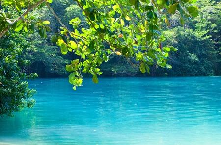blue lagoon: Giamaica. Una laguna blu. (Popular dopo aver girato il film con lo stesso nome)