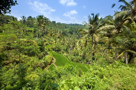 Tropical plants on a hill slope, Indonesia. Bali Stock Photo - 12728295