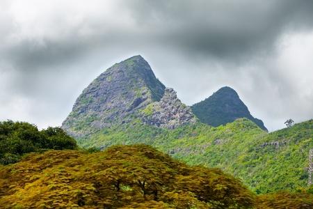 Naturaleza de la Isla Mauricio. Madera y monta�as Foto de archivo - 13516255