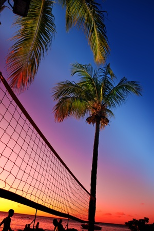Grid for beach volleyball between palm trees at a sunset and sea background photo