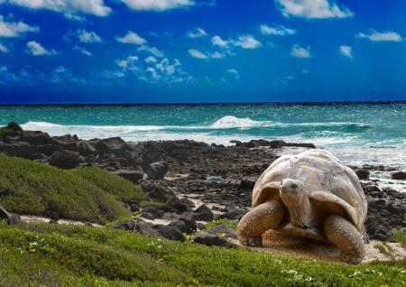 열대 풍경의 배경에 바다의 가장자리에 큰 거북