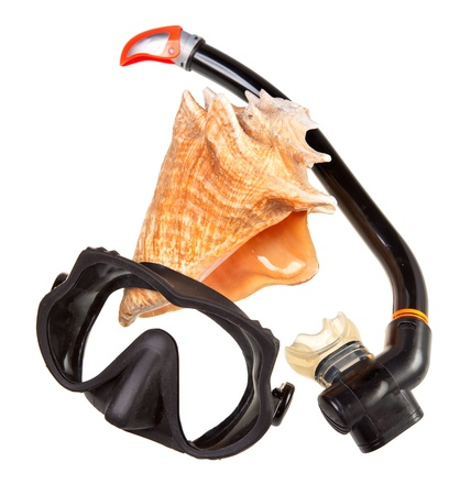 Big sea shell and equipment for diving (snorkel) Stock Photo - 16454766