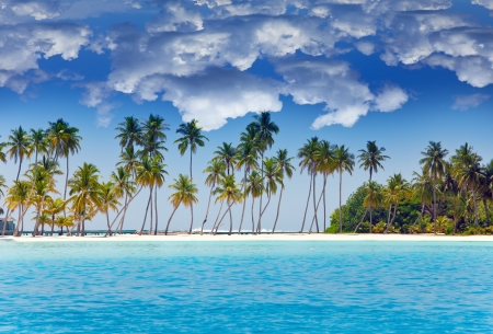 tropical beach: The island with palm trees in the ocean