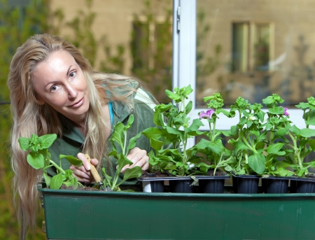 transplants: The young woman transplants seedling Stock Photo