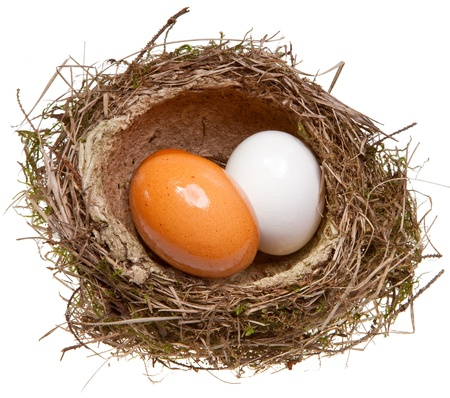 birds nest with eggs inside, isolated on white photo