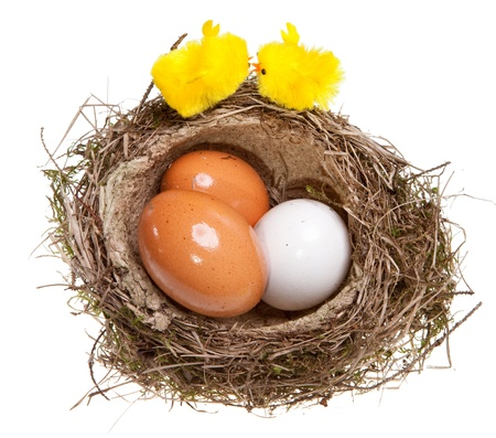 birds nest with eggs and toy chickens inside, on white photo