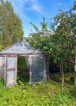 hotbed: Season of a crop - apples in a garden and  a hotbed Stock Photo