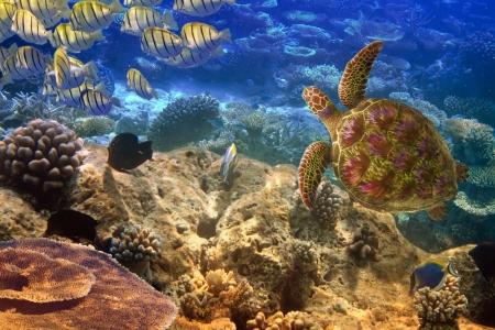 인도양. 수중 세계적 거북이와 물고기