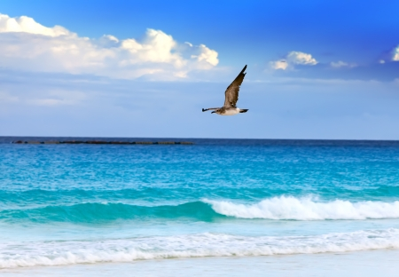 Seagull over sea photo