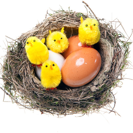 Nest with eggs and chickens on white background  photo