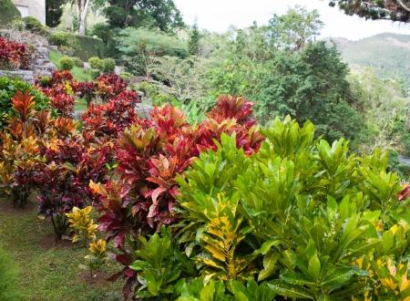 soroa: park of Soroa (Jardin Botanico Orquideario Soroa), Cuba.