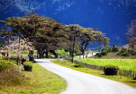 The road in Vinales Valley, Cuba photo