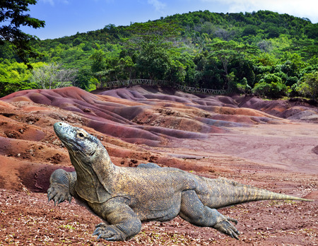 Large monitor lizard on multi color sand   photo