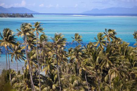 borabora: Azure lagoon of island BoraBora, Polynesia. Mountains, the sea, palm trees.