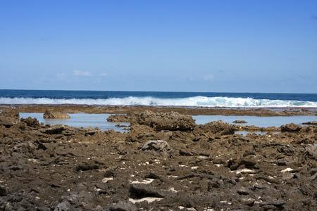 polynesia: French Polynesia. Coral fields