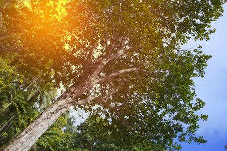 clima tropical: Los �rboles de clima tropical, vista desde abajo Foto de archivo