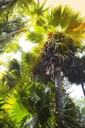 clima tropical: Los árboles de clima tropical, vista desde abajo.