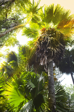 tropical climate: Trees of tropical climate, bottom view. Stock Photo