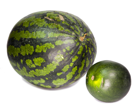 dwarfish: Two water-melons of various grades - big and dwarfish Stock Photo
