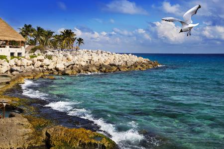 The sea coast in park near Cozumel, Mexico Stock Photo