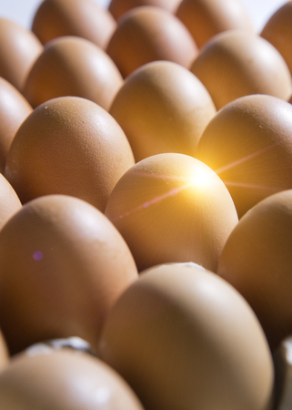 Eggs lie in the cardboard support
