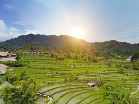 Aerial view from drone on rice terraces. Indonesia. Bali. Stock Photo