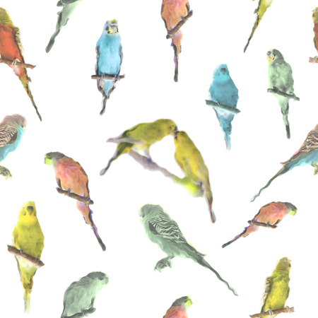 parrot budgerigar (Melopsittacus undulatus) watercolor seamless pattern