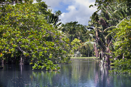 voyage: Nature of Mauritius. Lake and tropical trees.