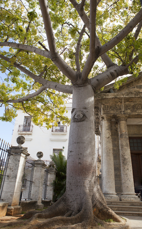 The famous Ceiba Tree on Plaza de Armas in old Havana, people bypass to circle the tree in hopes of execution their wishes.