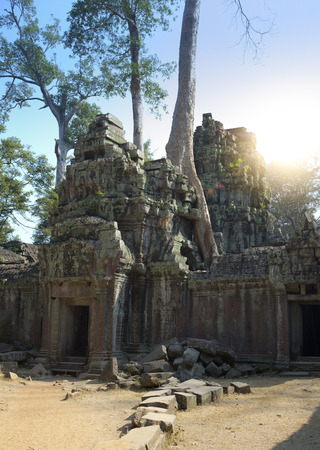 Jungle tree covering the stones of the temple ruins (XII th Century) in Angkor Wat (Siem Reap, Cambodia)