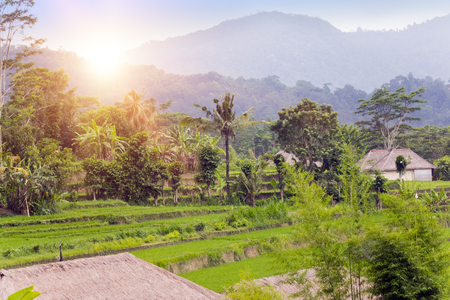 Panoramic view of rice terraces and mountains. Bali, Indonesia Stock Photo