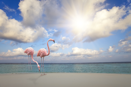 Two pink flamingos on the sandy beach by the blue sea under the sky with the sun through clouds Фото со стока