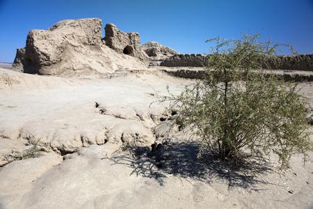 saxaul (Haloxylon, plant family Amaranthaceae) in the settlement Toprak-Kala- clay fortress Stok Fotoğraf