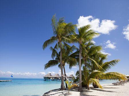 View of the sandy beach with palm trees and hammok, Bora Bora, French Polynesia Banco de Imagens
