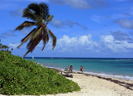 bacardi: Holiday, sea, sun, palm trees - a paradise on earth. Stock Photo