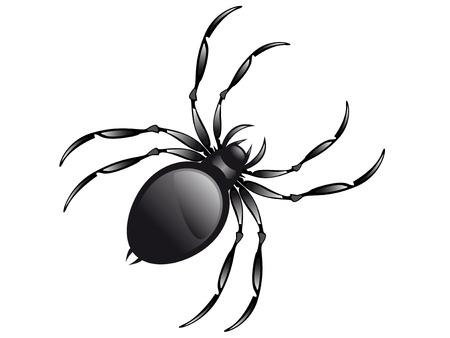 araña aislado en la ilustración vectorial de fondo blanco