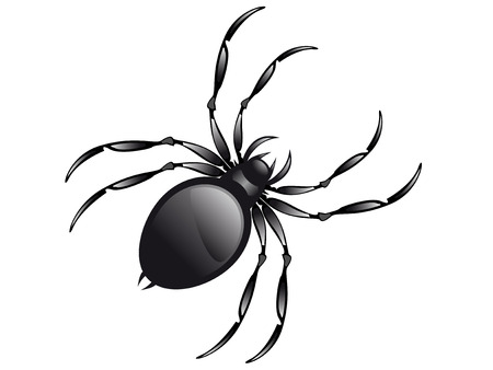 Spider geïsoleerd op witte achtergrond vector afbeelding